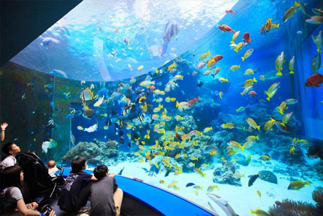 シーサータクシー_熱帯魚の海