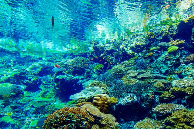 シーサータクシー_サンゴの海